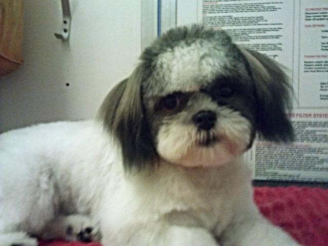 Ddd petsalon dog grooming my town brighton for A cut above pet salon